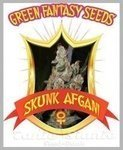 GREEN FANTASY SEEDS - Skunk Afghani