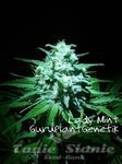 Biological Seeds - Lady Mint