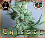BIG BUDDHA SEEDS - Chiesel