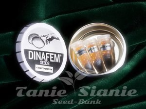 DINAFEM - Collectors Pack Nº 29
