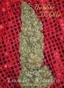 MANDALA SEEDS - Hubble Bubble