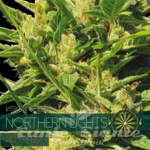 autofem-vision-seeds-northern-lights-500x500-1.jpg